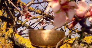 Meditación Aromaterapia con Cuencos Tibetanos Natasha M. Kozlina @ Espacio La Pradera | Madrid | Spain